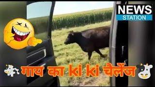 #InMyFeelingschallenge kiki challenge cow | In My Feelings Challenge Has Gone Global | News station