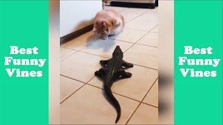Best Funny Animals Fails Compilation 2018 | New Animals Fails Compilation - Best Funny Vines