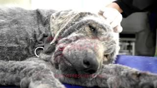 DUMPED TO DIE IN A GARBAGE DUMP , JUSTIN IS CRITICAL ! WE MUST HELP HIM NOW !