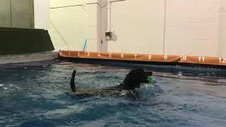 Naked Swimming
