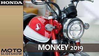 2019 Honda Monkey | Pearl Nebula Red | SCRAMBLER & CAFE | Moto Slideshow