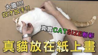 真貓放在紙上畫|屯門畫室|real cat pastel