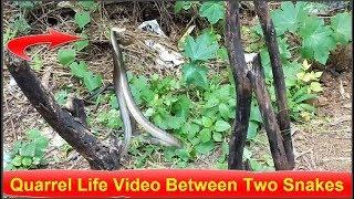 Indian Quarrel Life Video Between Two Snakes Be ' Saap Vache Jagdo video 2018
